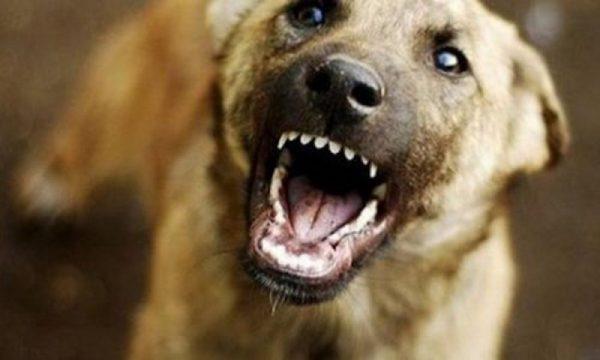 Шматував, розгриз частину обличчя, моторошні крики: сусідський пес понівечив 3-річну дитину