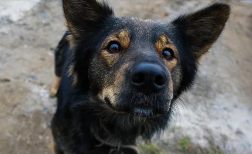 """""""А сьогодні на обід собака"""": на Вінниччині чоловік жорстоко вбив домашню тварину, а потім нагодував нею сім'ю"""