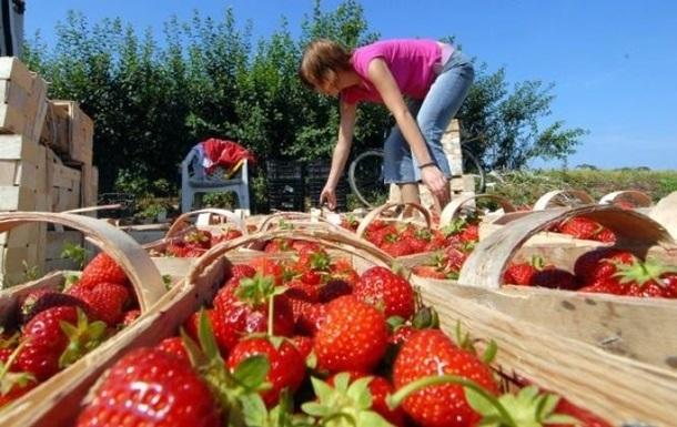 У Польщі на фермі українські заробітчани захворіли на COVID