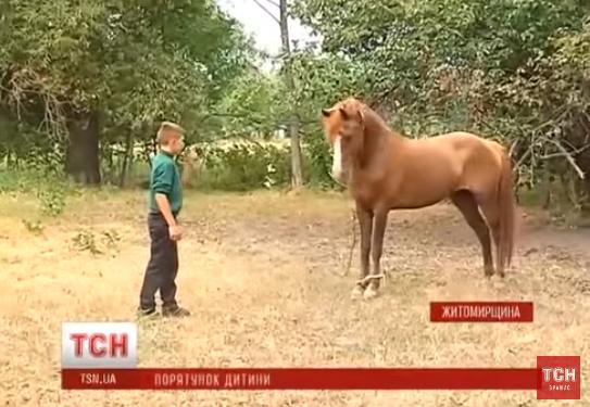 Трагедія у селі: кобила відкусила 6-річному хлопчикові статевий орган (відео)