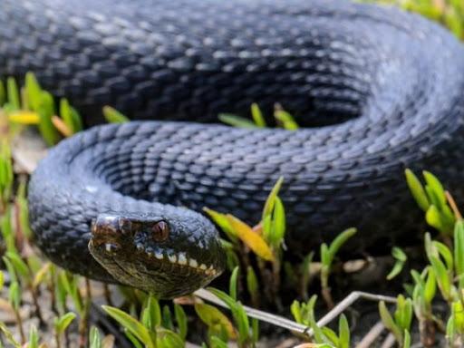 В Одесі прямо на вулиці помітили двометрову змію: відео