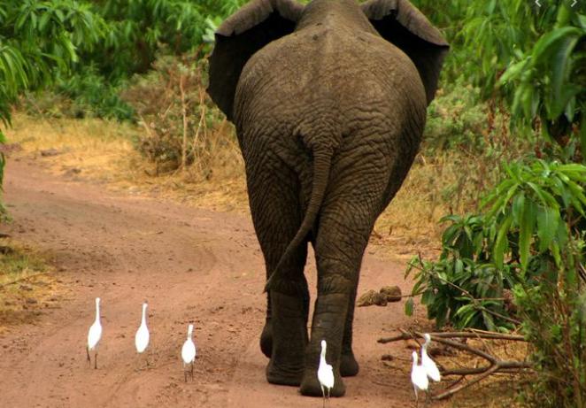 Слон знайшов смартфон туриста і влаштував йому краш-тест: схоже, він не любить айфони