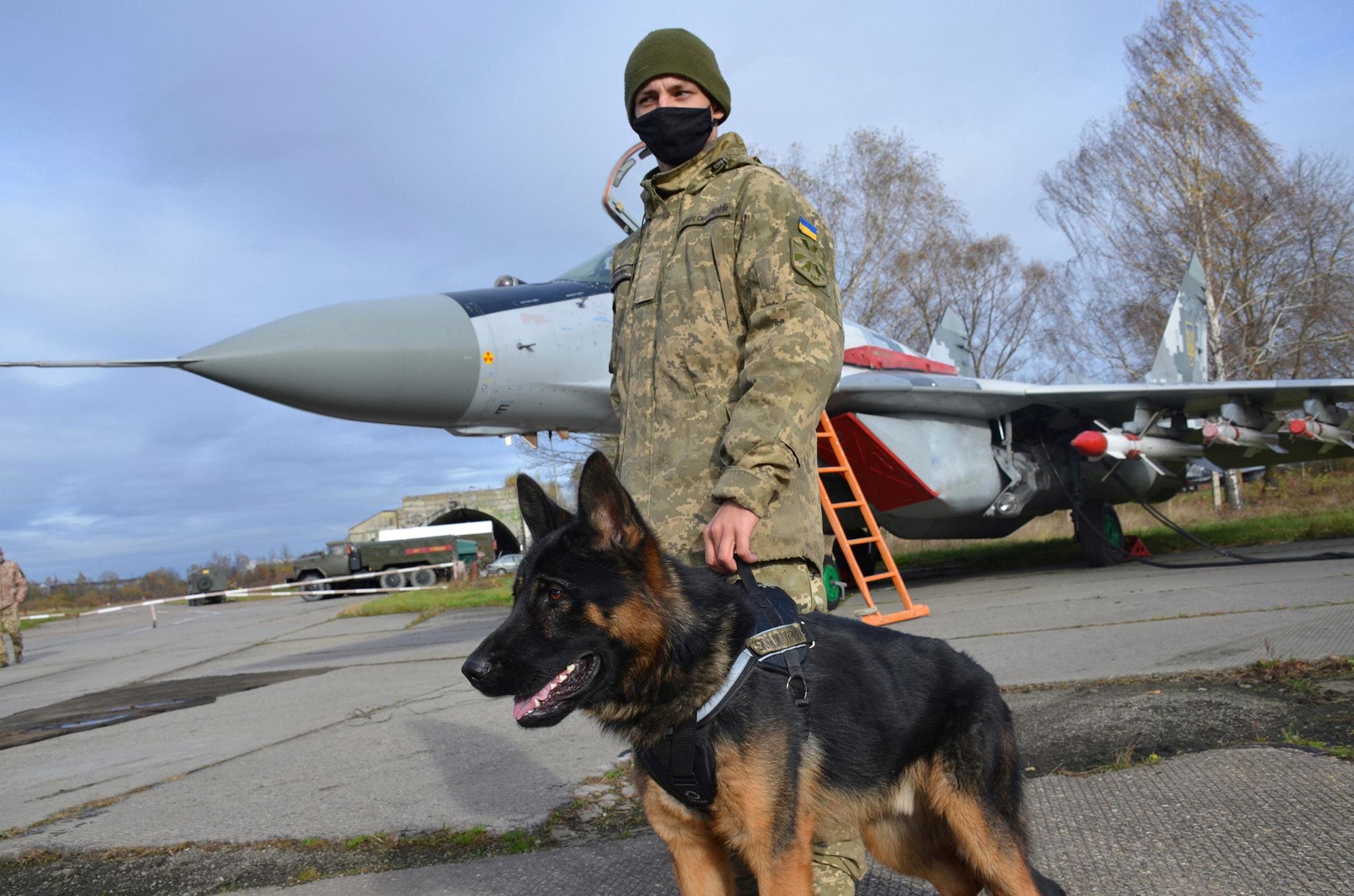 """""""Щенячий патруль"""": у Франківську собаки-військові складають заліки (ФОТО)"""
