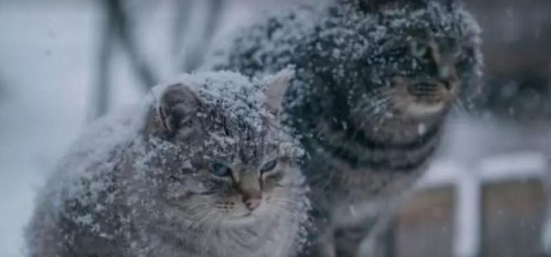 110 днів снігу та сильні морози: народний синоптик здивував прогнозом погоди цієї зими