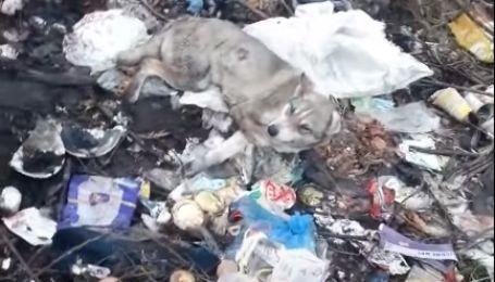 Жорстоке побиття собаки на Львівщині: чи вижила тварина, яку викинули на смітник (відео)