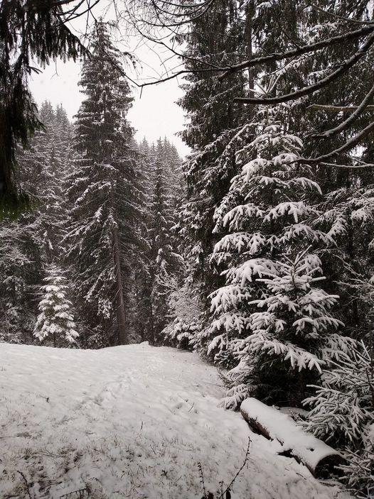Карпати перед Новим роком замело снігом: в мережі діляться казковими фото
