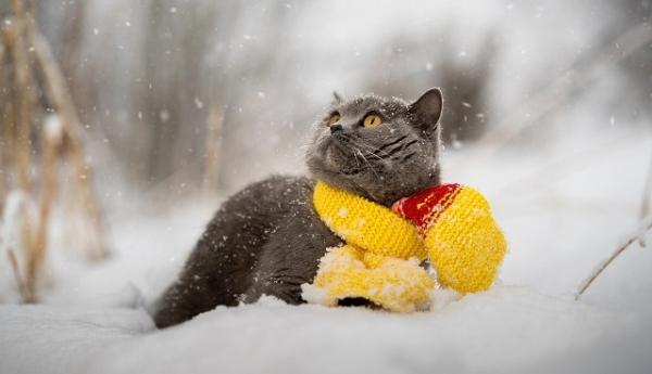 Україну засипле півметровим шаром снігу: відомо коли
