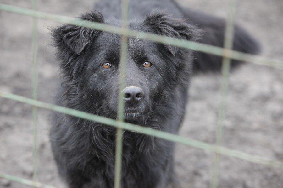Прив'язав собаку до бампера і поїхав: на Львівщині судитимуть чоловіка, який знущався над собакою