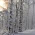 В Україну ідуть хуртовини і сильний сніг: оголошено штормове попередження