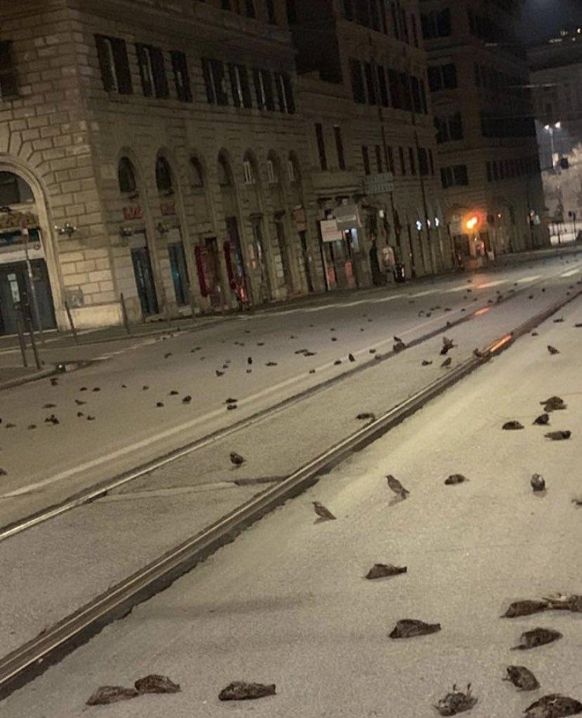 """У Римі випав """"дощ"""" з мертвих птахів: моторошні фото і відео"""
