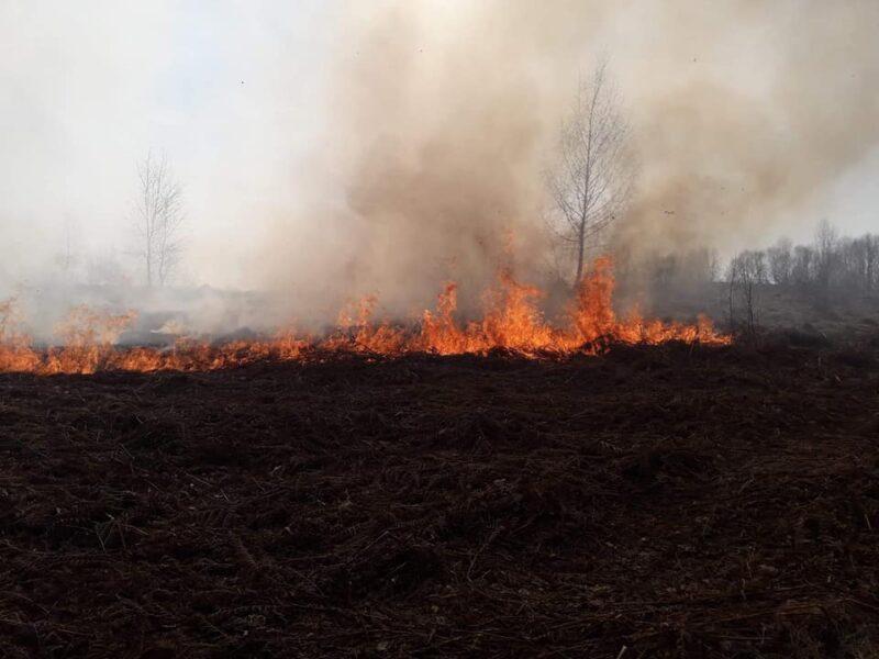 На Закарпатті масштабна пожежа: людей кличуть на допомогу (ФОТО, ВІДЕО)