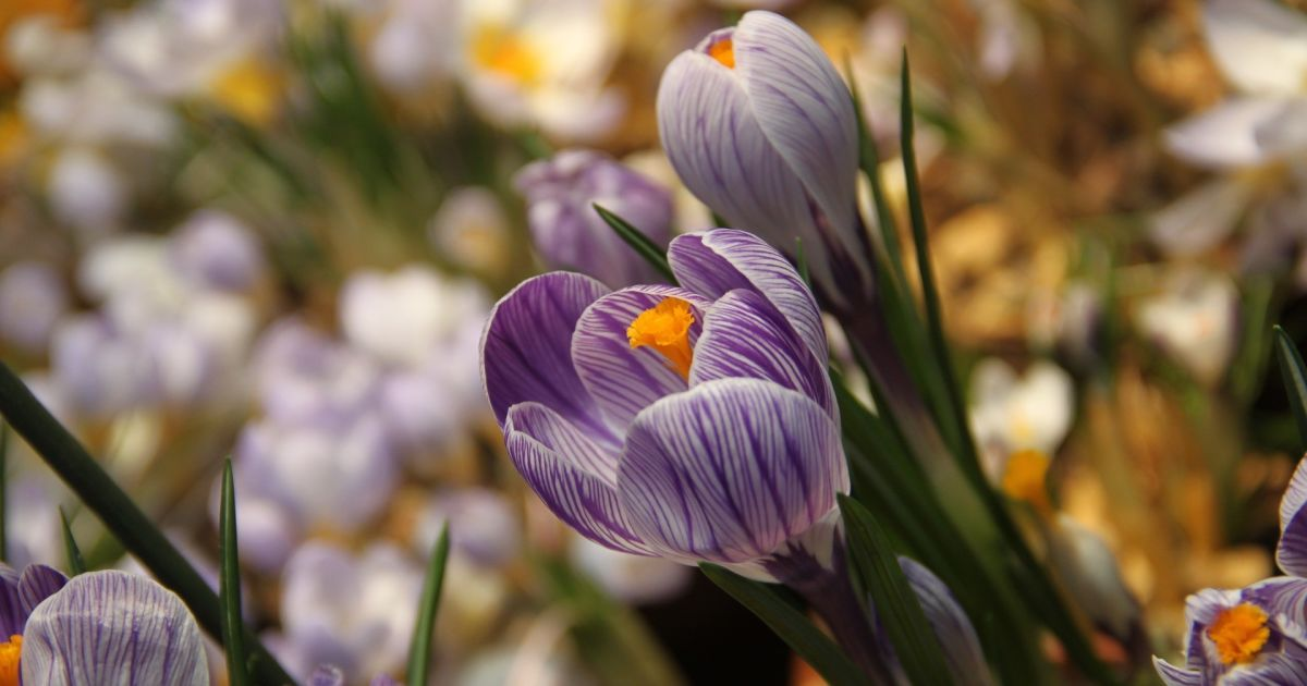Всі готуються до свята весни та жіночності, але ж 8 Березня не про це – ось трохи історії