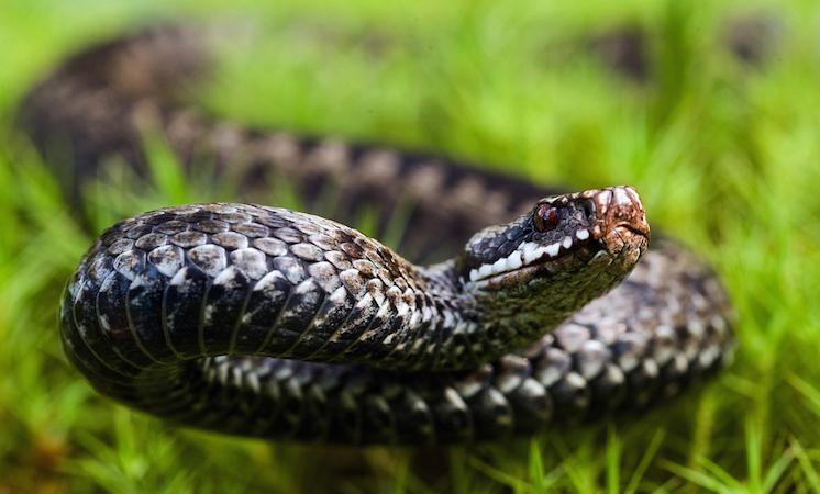 У Полтаві змія вкусила дитину на вулиці: що робити в таких ситуаціях