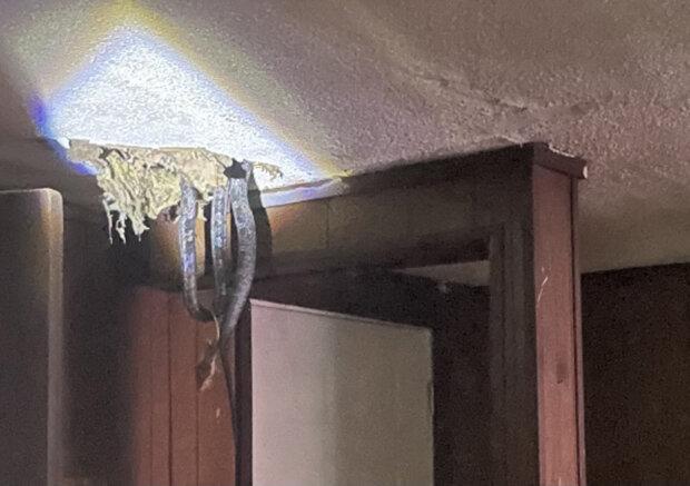 Лігво змій вивалилося прямо на голову сім'ї, яка воювала з щурами в своєму будинку