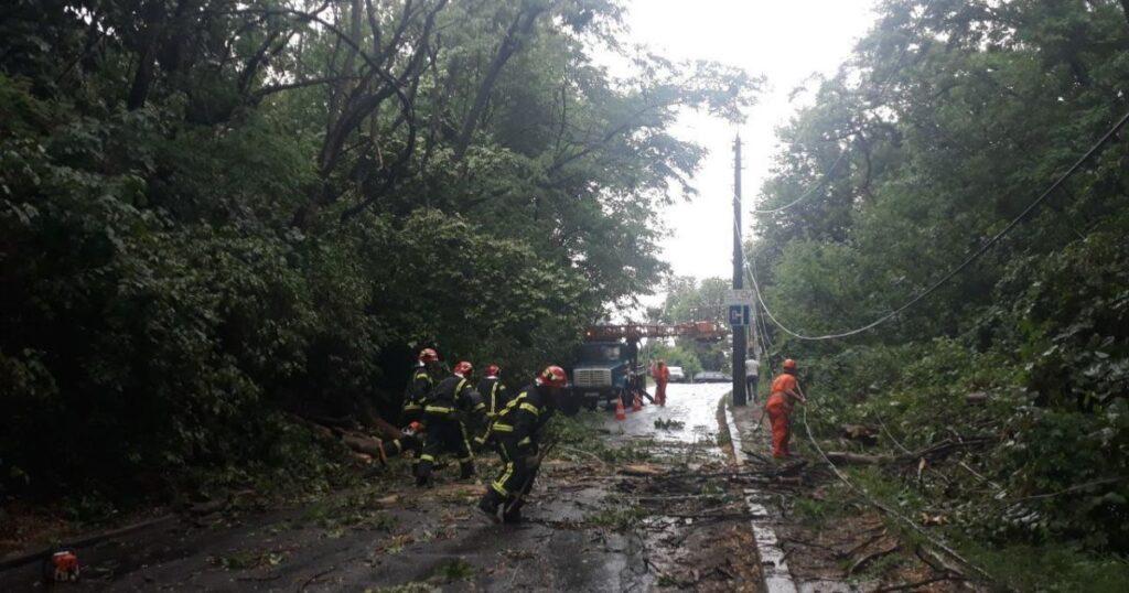 У Полтавській області дерево вбило підлітка