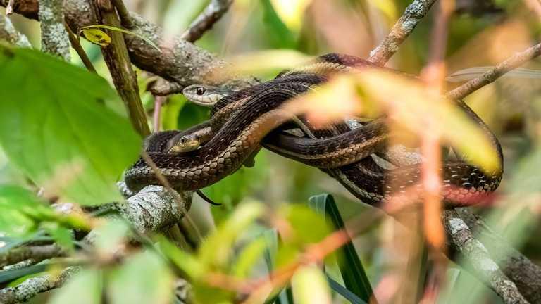 У США жінка знайшла під ліжком 18 змій