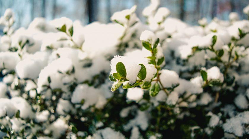 Такого сильного морозу ще не було: на півдні Африки вперше пішов сніг за останні 10 років. Відео